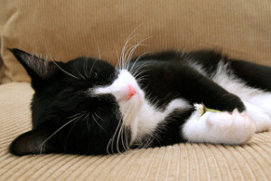 Another cat with better sleep habits than you.