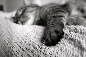 This sleepy cat gets better sleep than you